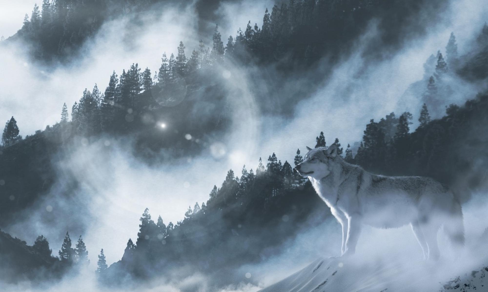 Henning Wolf